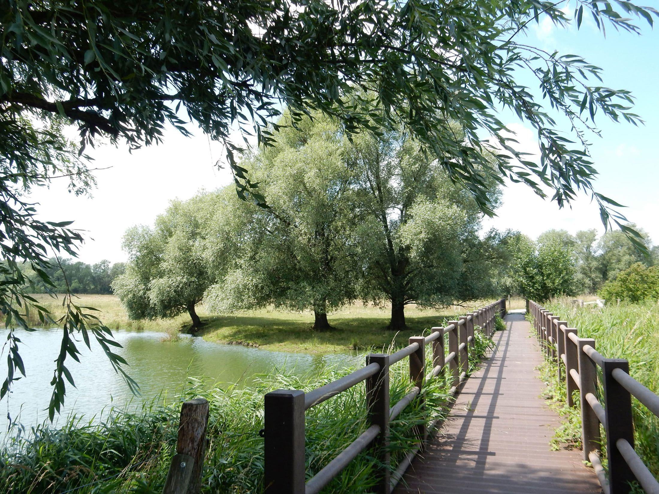 Mühlensee in Vehlefanz